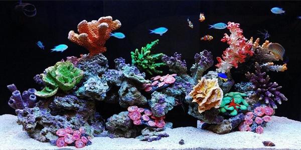 Аквариумы, аквариумные аксессуары