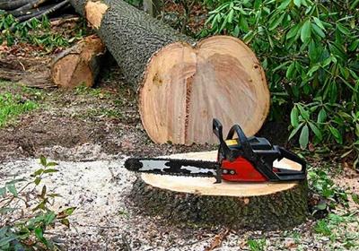 Фото: Искусство лесоповала или как срезать дерево!!!
