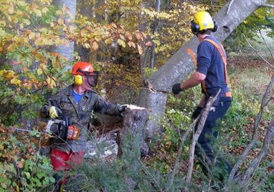 Фото: Как правильно срезать дерево бензопилой: свойства валки