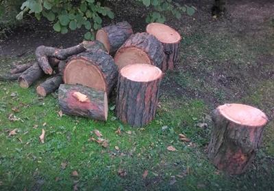 Фото: Как спилить дерево бензопилой? Как правильно валить деревья?