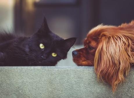 , Нюансы краткосрочной аренды жилой недвижимости с животными